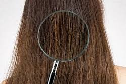髪の乾燥対策!