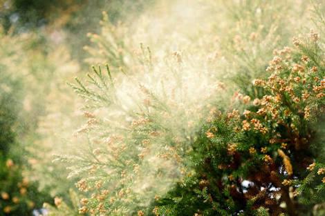 辛い花粉症!髪の花粉対策
